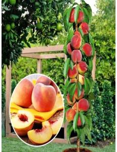 Колоновидный персик Медовый в Балашихе